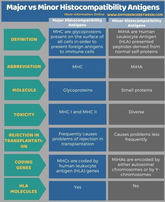 Difference Between Major and Minor Histocompatibility Antigens in Tabular Form