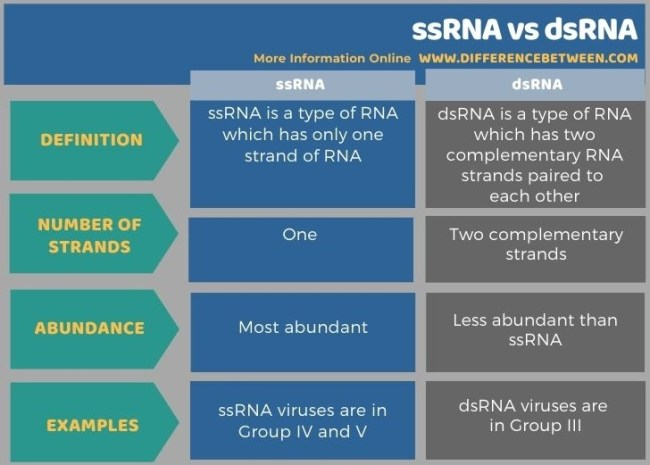 Difference Between ssRNA and dsRNA in Tabular Form