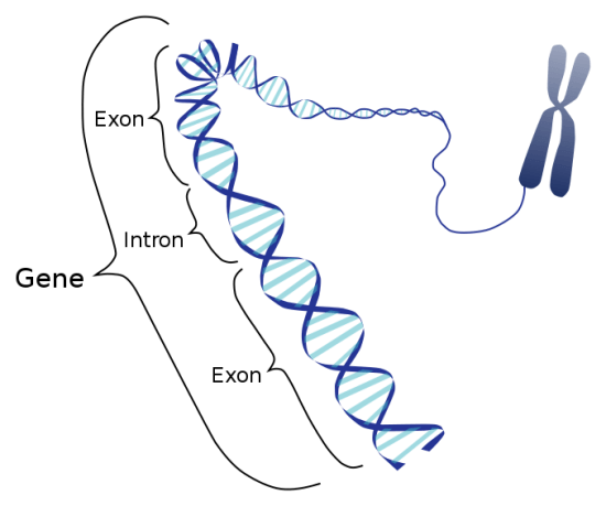 Difference Between Operon and Cistron