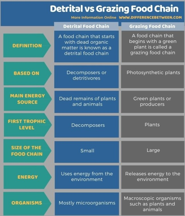 Difference Between Detrital and Grazing Food Chain in Tabular Form