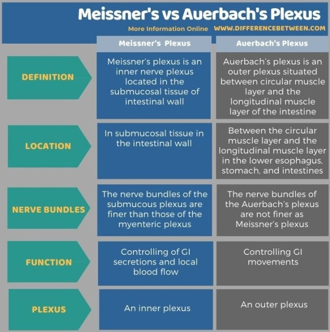 Difference Between Meissner's and Auerbach's Plexus in Tabular Form