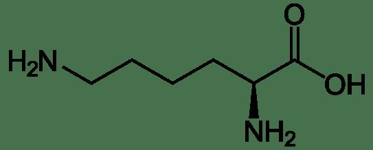 Lysine vs Leucine