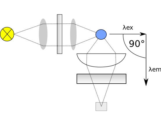 Compare Colorimetric and Fluorometric Assay