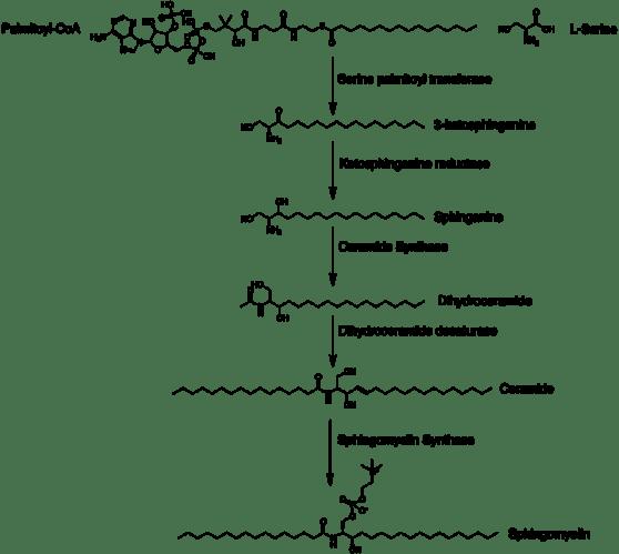 Sphingomyelin vs Phosphatidylcholine