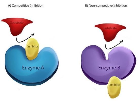 Non-Competitive vs Allosteric Inhibition