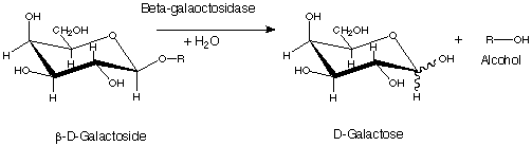 Alpha and Beta Galactosidase - Side by Side Comparison