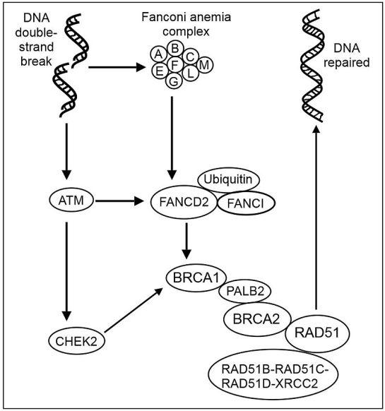 Fanconi Anemia vs Fanconi Syndrome in Tabular Form