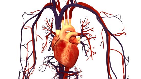 Cardiovascular System vs Lymphatic System in Tabular Form