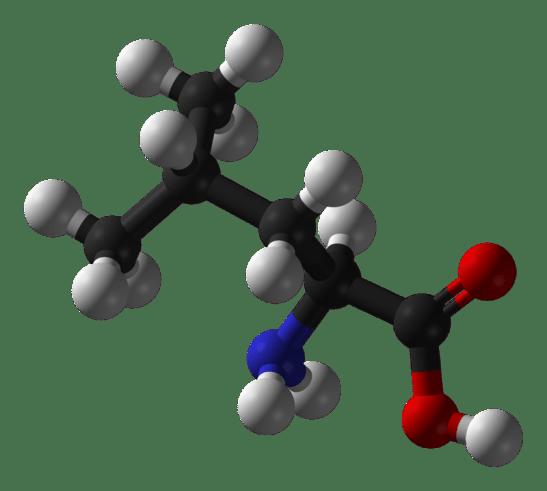 L-leucine vs Leucine in Tabular Form