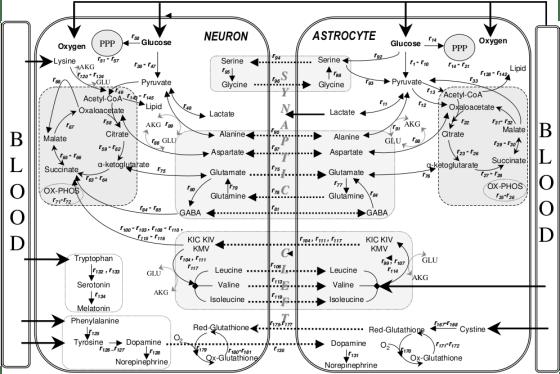 Metabolic Flux Analysis vs Flux Balance Analysis in Tabular Form
