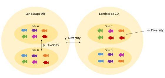 Alpha vs Beta vs Gamma Diversity in Tabular Form
