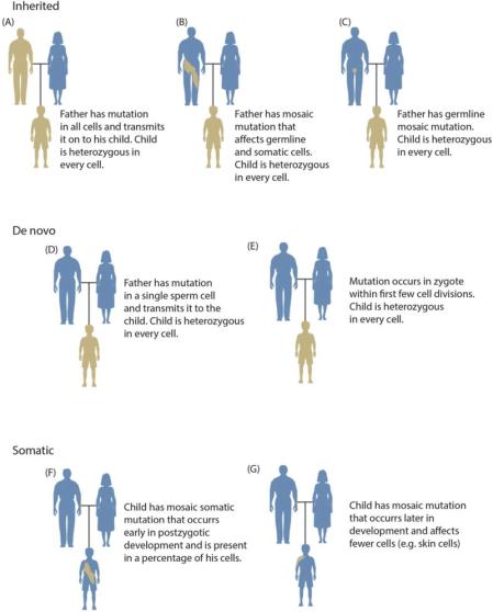Somatogenic vs Blastogenic Variation in Tabular Form