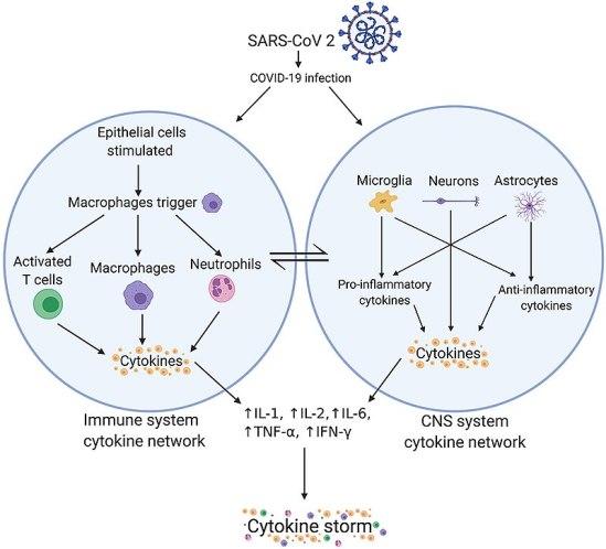 Cytokines vs Opsonins in Tabular Form