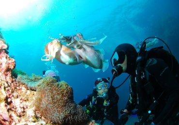 Les animaux marins jouent-ils ?