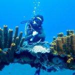 Une plongeuse derrière un morceaux d'épave en Guadeloupe