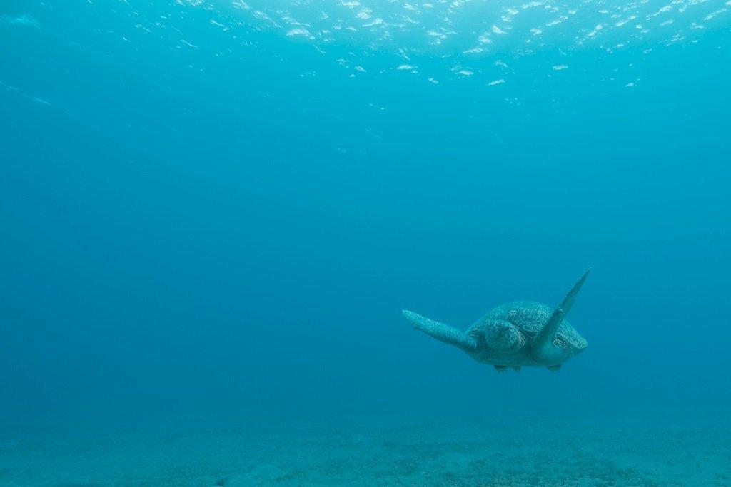 Une tortue qui nage vers l'objectif