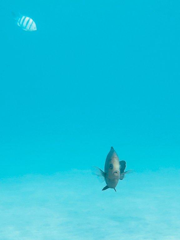 Un poisson regarde l'objectif