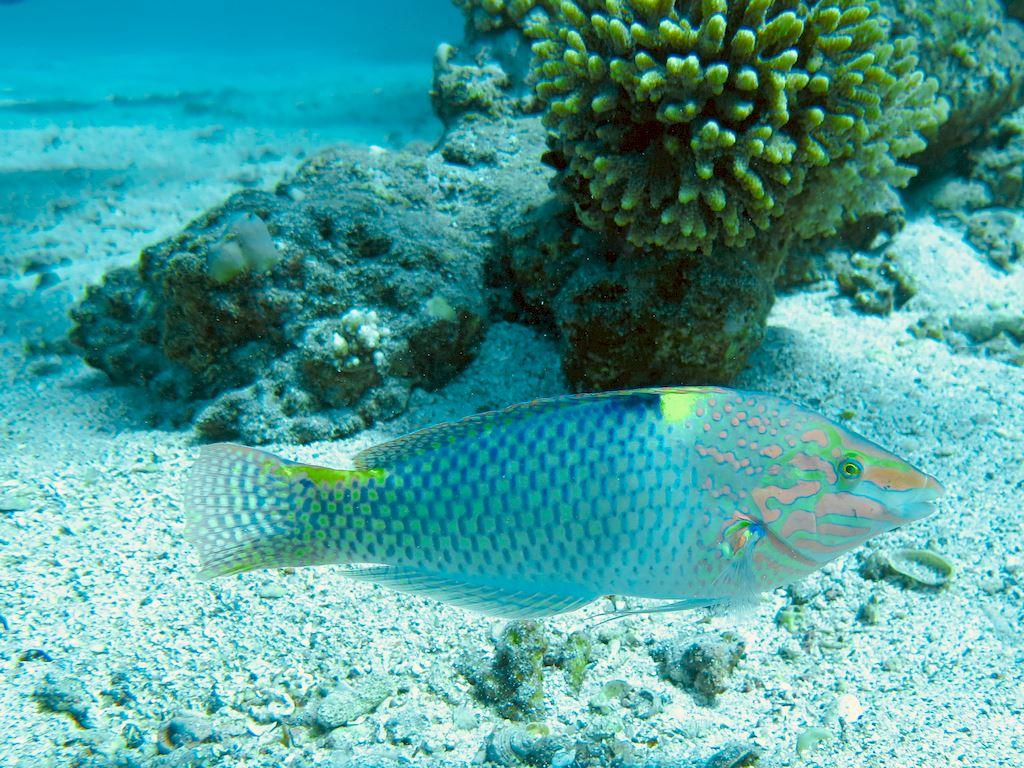 Un poisson coloré qui passe