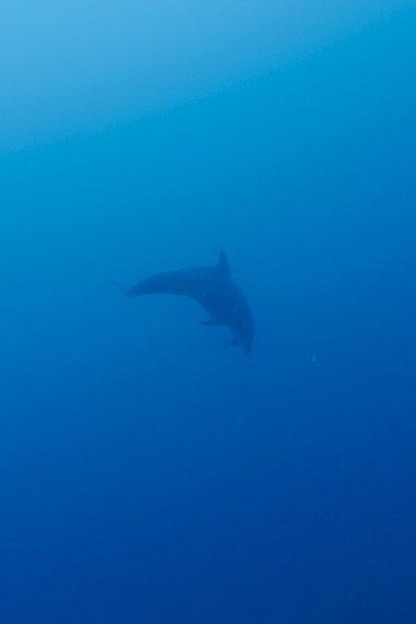 Un dauphin au loin dans la mer