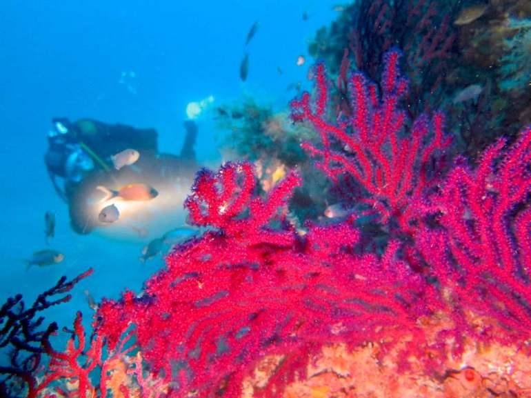 Un plongeur sur un tombant à Nice