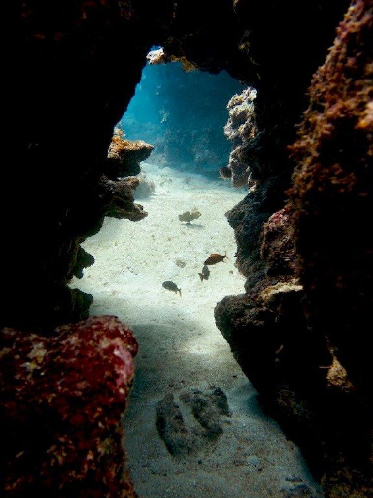 Partir plonger en Jamaïque et découvrir des canyons près d'une épave