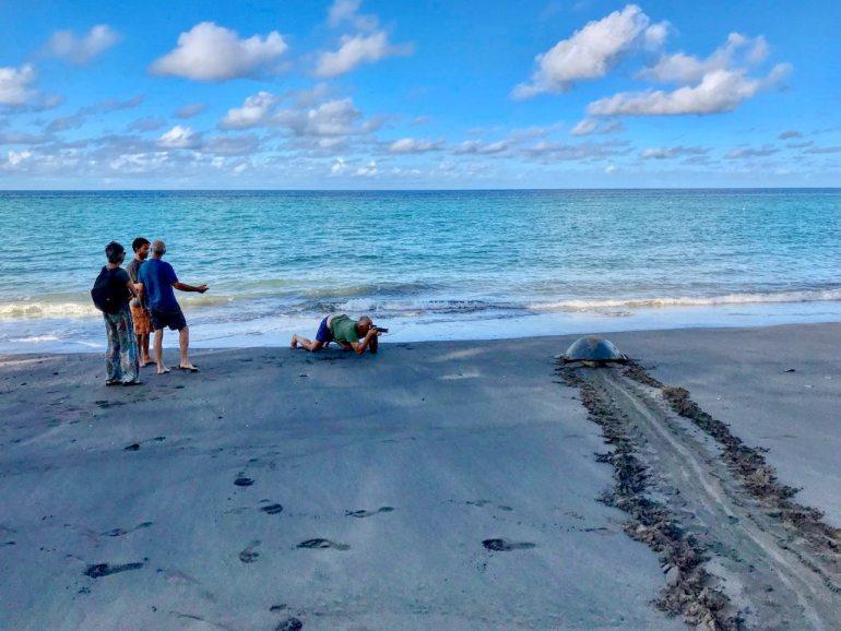 Des personnes observent une tortue qui rejoint la mer sur la plage de N'Gouja à Mayotte
