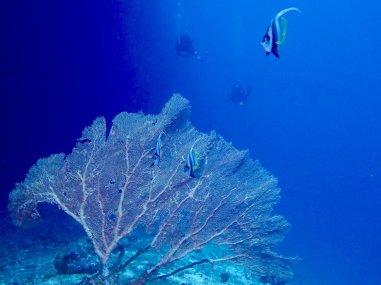 Les fonds marins vu en plongée au sud de Mayotte