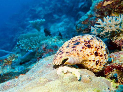 Un coquillage est posé sur un fond rocheux