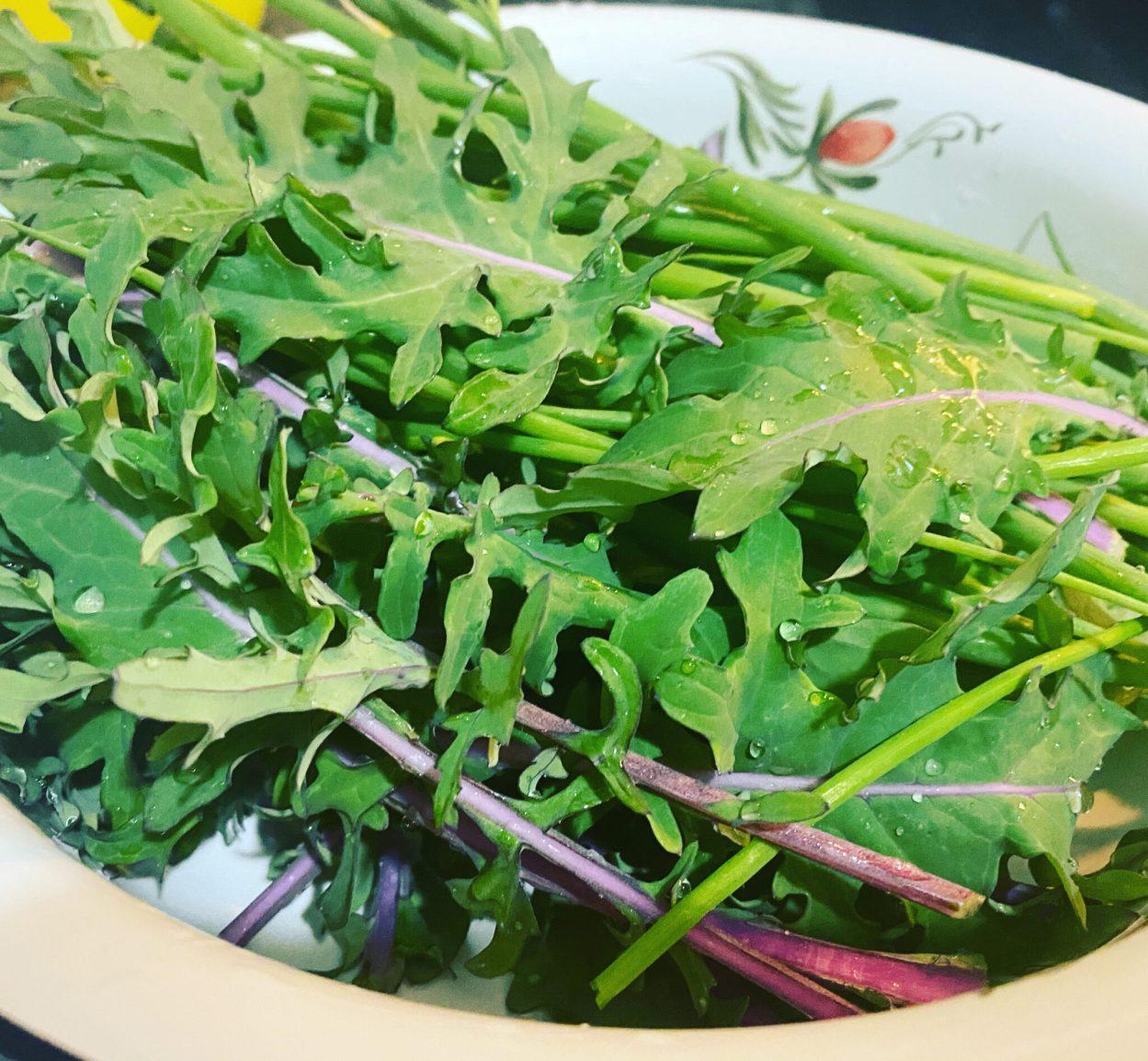 Russian Red Kale Organic Non-GMO