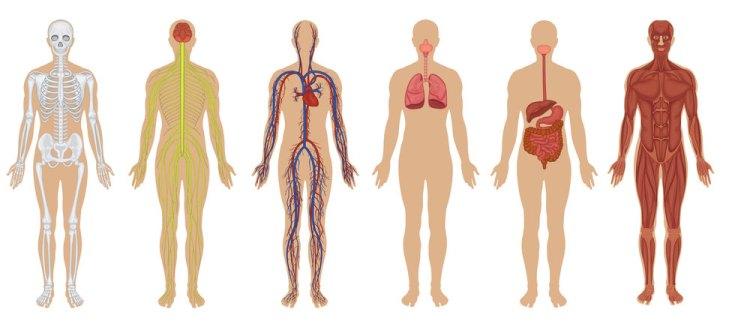 corpo_umano