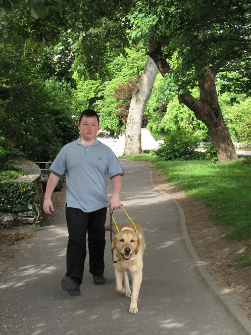 A picture of Freddie guiding me down a quiet road with a grass verge and large trees on each side.