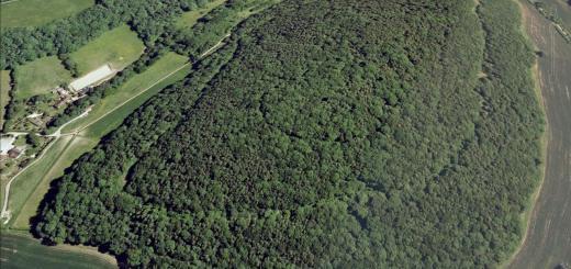 Orchard Wood Hillfort, Corfe, Somerset