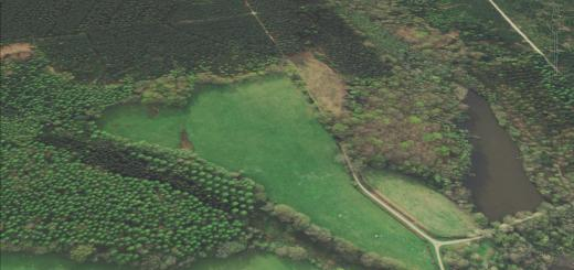 The Frith Hillfort, Hampshire
