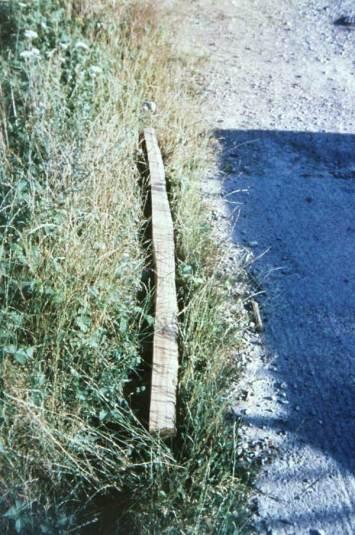 Fig.3 - The yew log split. The splitting was undertaken using wooden wedges.
