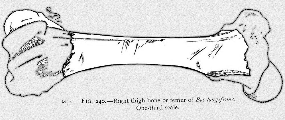 Figure 240.