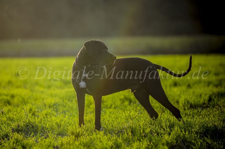Tierfotograf-006