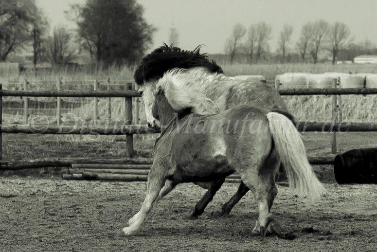 Tierfotograf-085