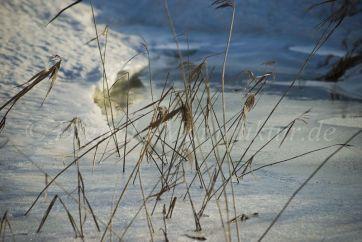 Winterlandschaft-55