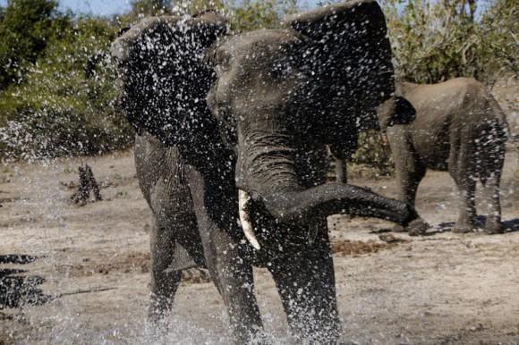 African Safari 3D- Afrikanische Tierwelt