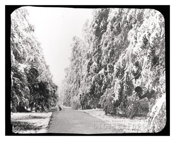 'Cedar Avenue'