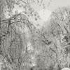 Reynolda Gardens, 1958.