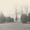Lawn on Cotton Row, 1895.