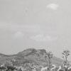 Tobacco field near Sauratown Mountain, 1957.