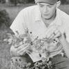 Unidentified man eating blackberries, 1956.
