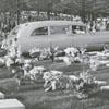 Easter Sunrise Service at God's Acre in Salem, 1957.