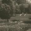 Runnymede Iris Gardens.