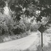 Highway marker for the Plank Road in Bethania, 1959.
