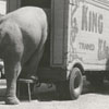 Elephant belonging to the King Brothers circus, 1954.