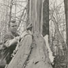 Homer McBride with a tree that was struck by lighning, 1967.