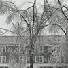 Ice storm hits Winston-Salem and damages trees throughout the city, 1967. Photo shows a dormitory at Wake Forest.